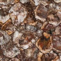 Prexury Petrified Wood